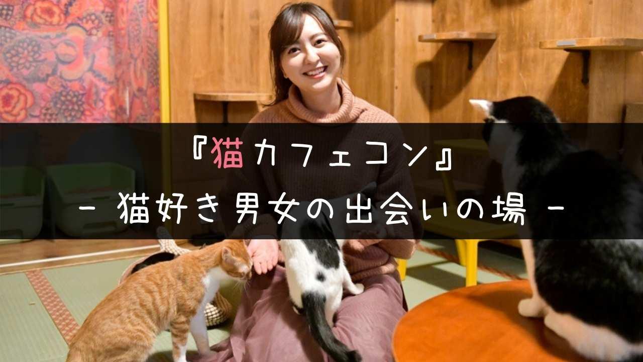 猫カフェコンのメリット・デメリットとよくある質問に主催者が回答